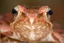 Anfibios e reptís